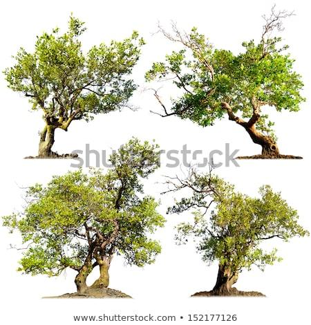 старые дерево парка природы небе завода Сток-фото © taden