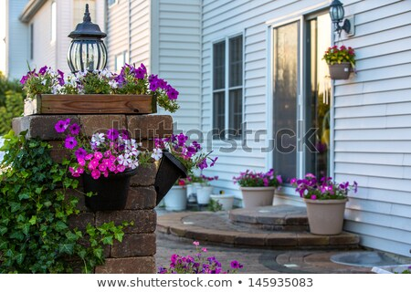 Petunias on the Brick Pillar Stock photo © ozgur