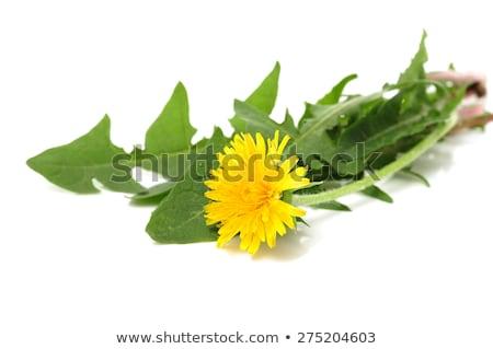 Citromsárga virág közelkép textúra háttér nyár Stock fotó © tainasohlman