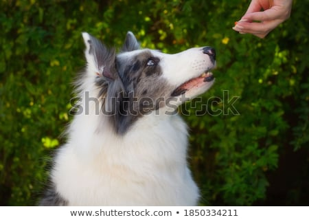 Foto stock: Biscuit With Three Eyes