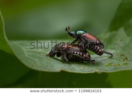 çift siyah davranış meşgul seks yaprak Stok fotoğraf © michaklootwijk