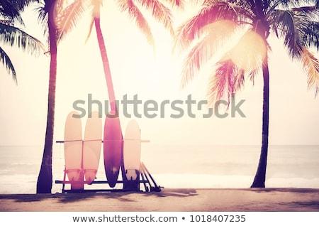 Trópusi tengerpart klasszikus retró stílus pálmafák tengerpart víz Stock fotó © Mikko