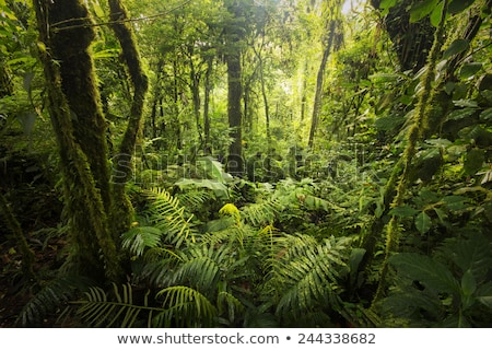 trees in a forest costa rica stock photo © bmonteny