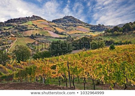 vineyard in Bertinoro hills in Romagna, Italy Stock photo © eddygaleotti