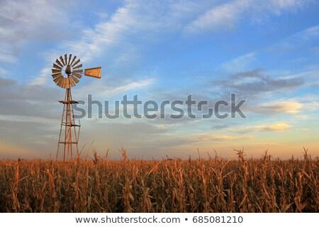 Oude windmolen schemering silhouet houten heuvel Stockfoto © olandsfokus