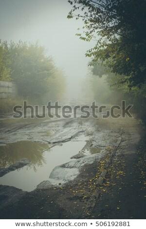 Fotoğraf eski ağaç büyük delik sığ Stok fotoğraf © Mps197