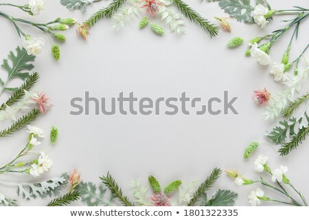 winter · frame · grijs · witte · sneeuwvlokken · veer - stockfoto © marinini