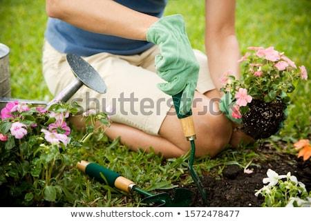 branco · jardim · fresco · flores · verde · arbusto - foto stock © -baks-