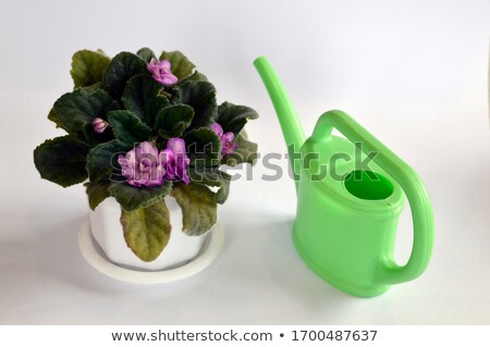 plastic watering can and lilac isolated on white  Stock photo © tetkoren