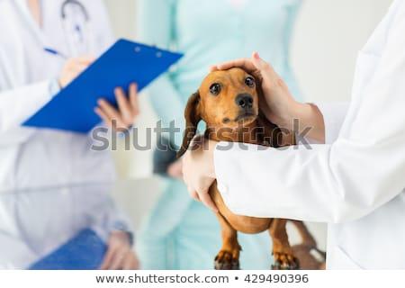 ветеринар собака Дать буфер обмена медицинской Сток-фото © wavebreak_media