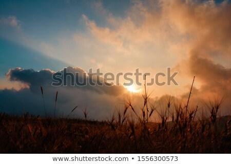 yellow sunset tall thistles Stock photo © morrbyte