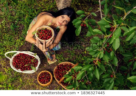 Twee mooie vrouwen zomer boomgaard geurig Stockfoto © majdansky