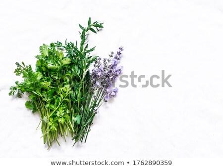 Hierbas blanco alimentos planta bebidas Foto stock © Masha