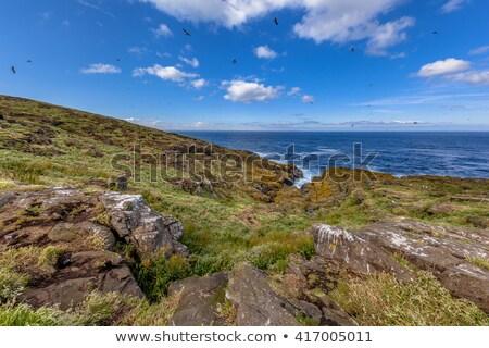 Isle of May, Scotland Stock photo © lightpoet