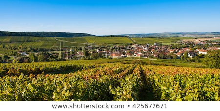 Champagne vineyards in the Cote des Bar area of Aube Stock photo © FreeProd