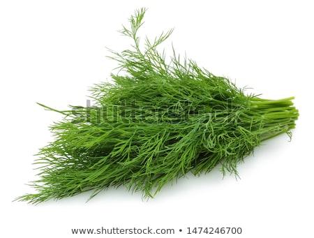 erva · daninha · fresco · branco · verde · planta · estúdio - foto stock © digifoodstock
