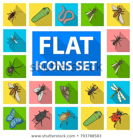 Different kind of insects that fly Stock photo © bluering