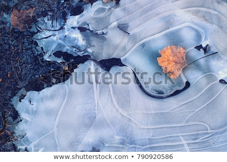 frozen leaf in an ice puddle Stock photo © meinzahn