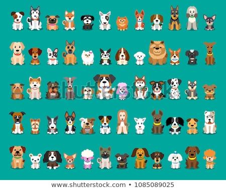 Szett kutyafajta illusztráció boldog háttér portré Stock fotó © bluering