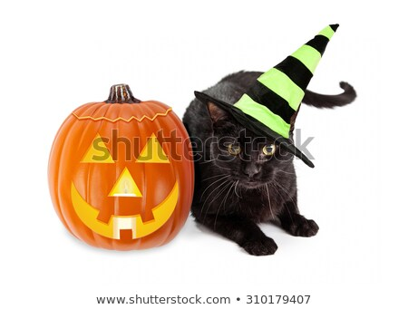 a black cat in a witchs hat next to a pumpkin stock photo © natalia_1947