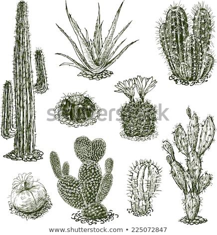 aranyos · kézzel · rajzolt · rajz · firka · kaktusz · szett - stock fotó © netkov1