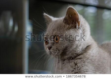 крошечный · неделя · старые · котенка · белый · прелестный - Сток-фото © 2tun