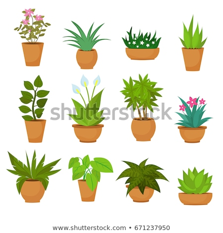 Flora in Pots, Set of Botanical Potted Plants Stockfoto © robuart
