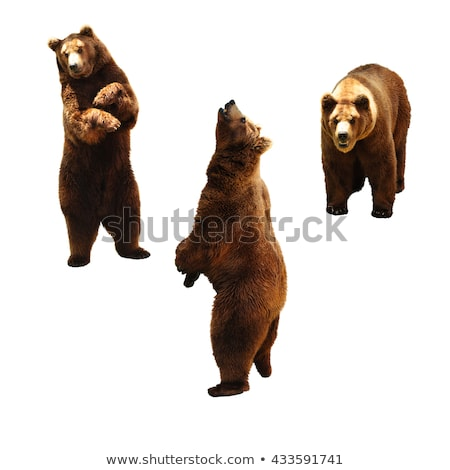 Stock photo: Set of animals and people in nature frame