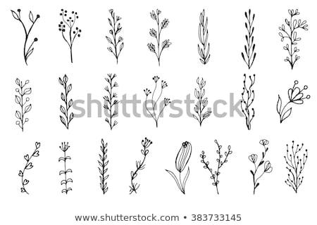 zestaw · pozostawia · logos · zielony · liść · bazgroły - zdjęcia stock © marish
