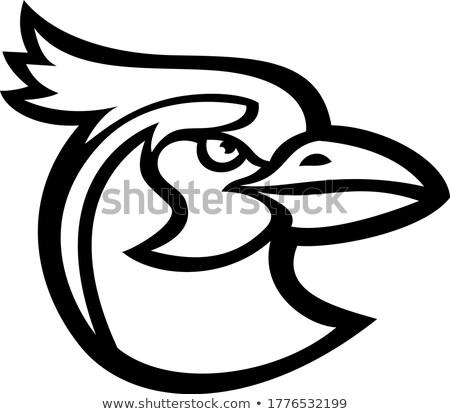 black throated magpie jay mascot stock photo © patrimonio