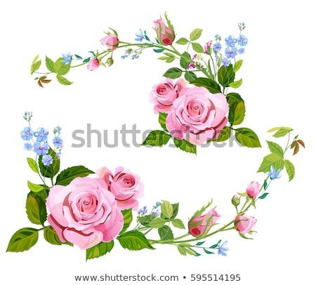 Beyaz pembe güller buket ayarlamak çiçekler Stok fotoğraf © robuart