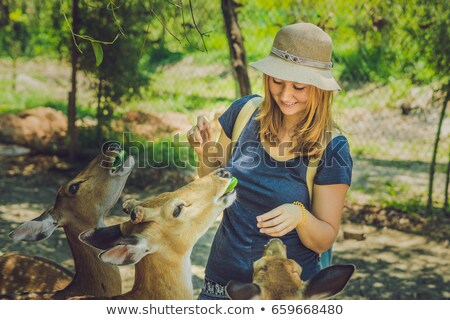 Fiatal nő etetés gyönyörű szarvas kezek trópusi Stock fotó © galitskaya