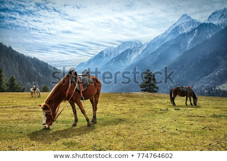 Cavalos himalaia vale paisagem campo verde Foto stock © dmitry_rukhlenko