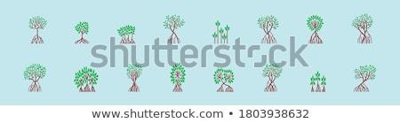 mangrove woods Stock photo © sapegina