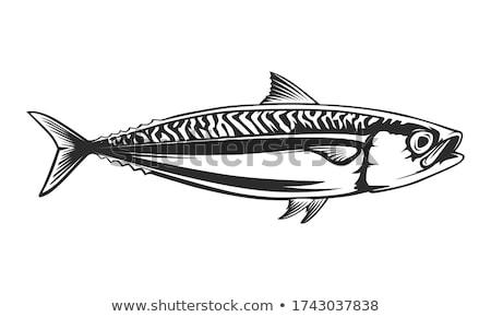 силуэта · скумбрия · белый · воды · рыбы · морем - Сток-фото © perysty