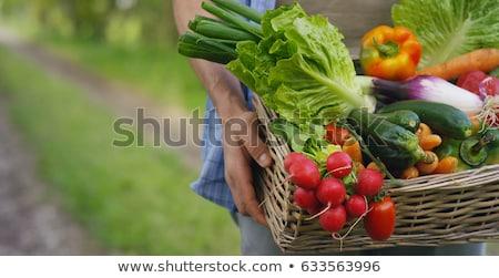 káposzta · zöld · közelkép · nő · tart · mutat - stock fotó © ozaiachin