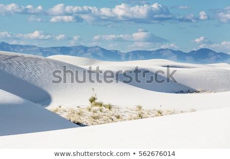 Curvas areia branca artístico nudez estilo quadro Foto stock © dolgachov