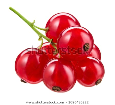 isolated redcurrant Stock photo © M-studio