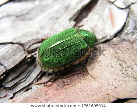 Besouro verde fresco folhas verdes cinza Foto stock © gewoldi