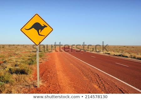 canguru · país · árvore · grama · estrada - foto stock © iofoto