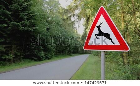 yol · trafik · işareti · park · ABD · güneş · sokak - stok fotoğraf © weltreisendertj