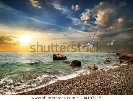 чайка морем океана птица синий Сток-фото © kravcs