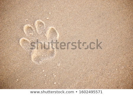 dog paw prints in sand stock photo © juhku