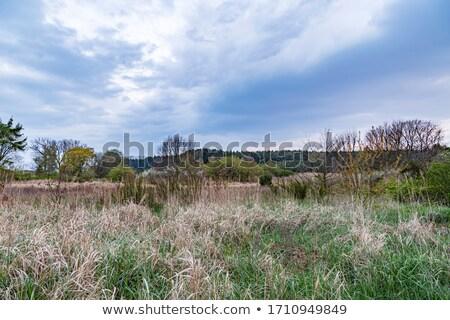 Paisagem brilhante cores céu nuvens madeira Foto stock © meinzahn
