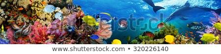Fajok hal vízalatti világ Vörös-tenger tenger Stock fotó © OleksandrO