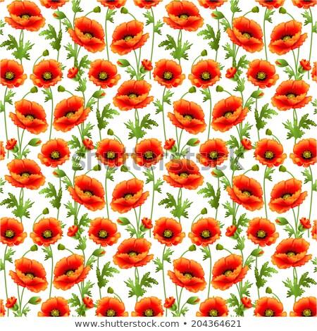 herbe · verte · fleurs · insectes · isolé · blanche · design - photo stock © yurkina