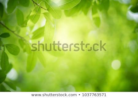 Voorjaar bladeren groene bladeren natuurlijke regenachtig bewolkt Stockfoto © vavlt
