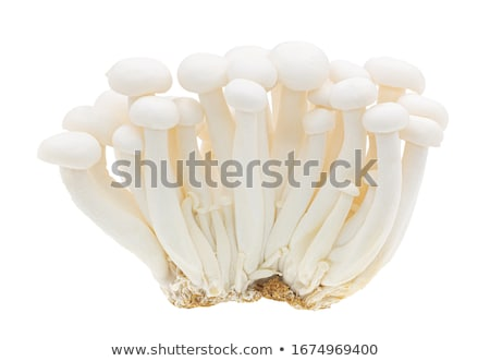 White Beech Mushroom  Stock photo © dezign56