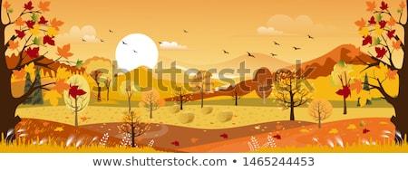 árboles hojas montana forestales hierba naturaleza Foto stock © mahout