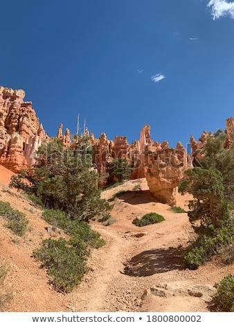 Kanion piętrze parku Utah USA drzewo Zdjęcia stock © emattil
